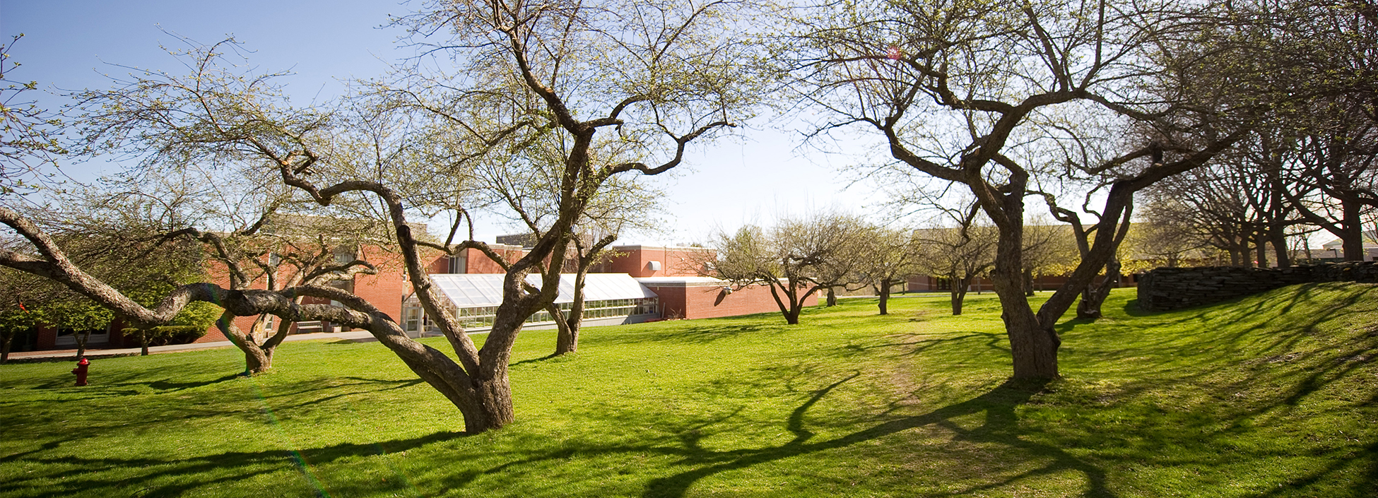 Beautiful apple trees located between Green Hall and greenhouse and our Hartness Library on the Randolph Center campus.