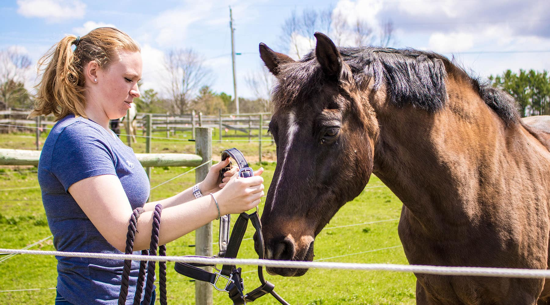 Horse bows his  head for female student can put on his lead, hands on