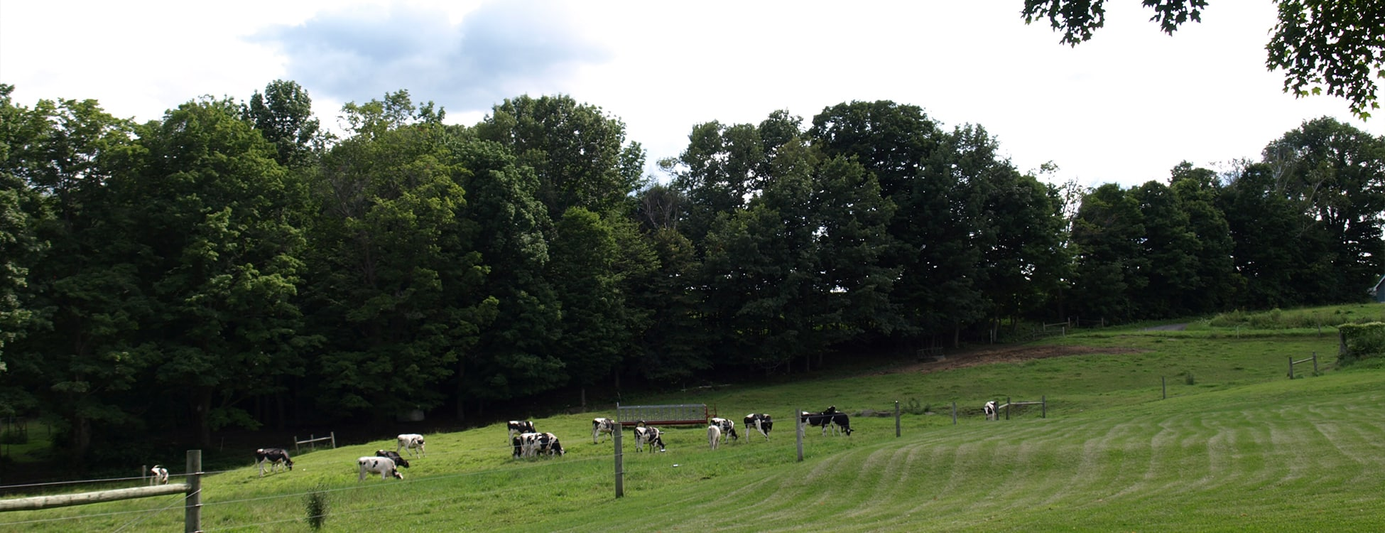 Vermont agriculture, cows, Randolph Center campus