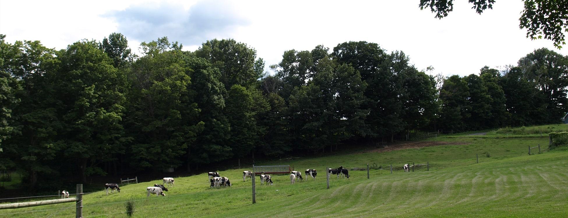 Vermont agriculture, cows, Randolph Center campus