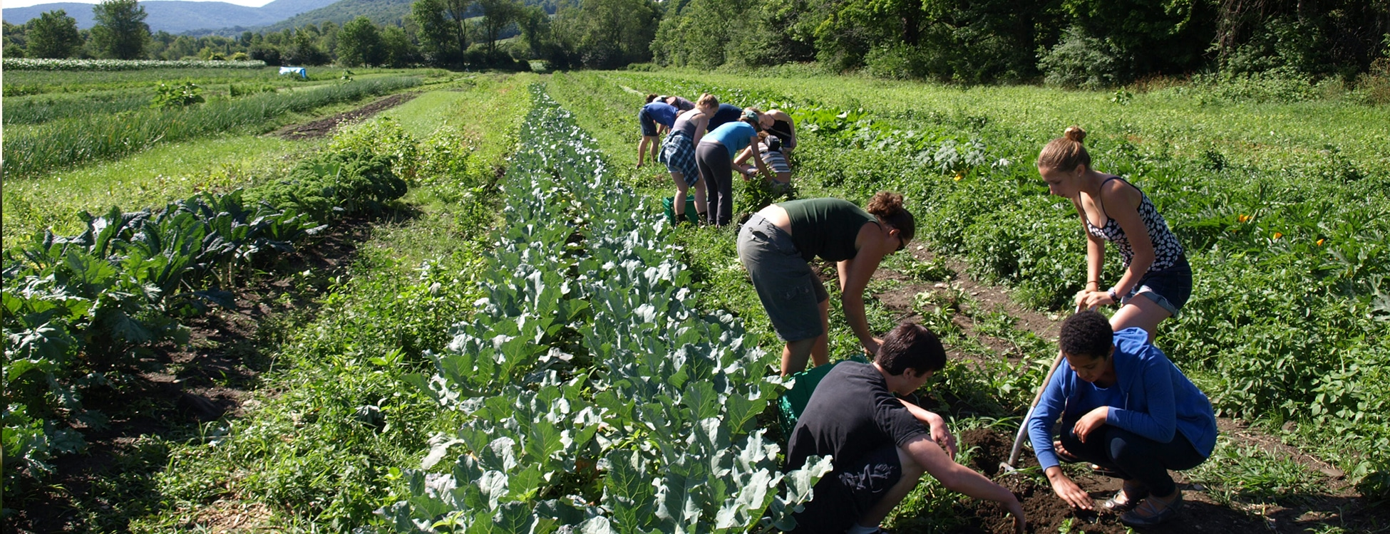 Students working in a garden, Randolph Center Campus