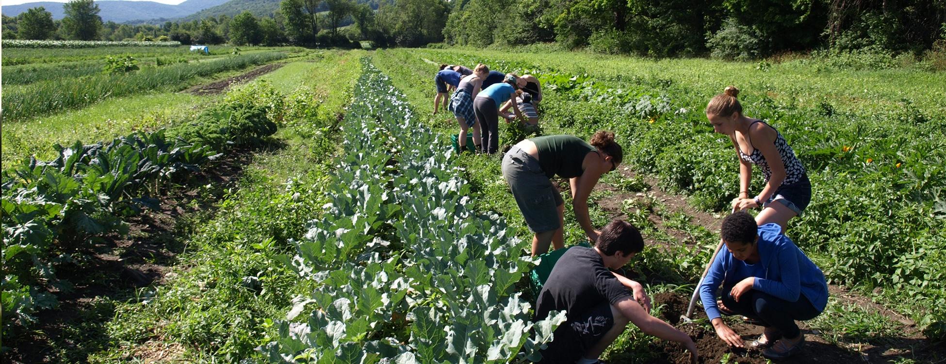 Students working in a garden, Randolph Center Campus