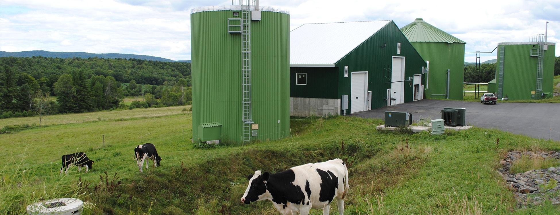 Vermont Tech's digester, cows, Randolph Center campus