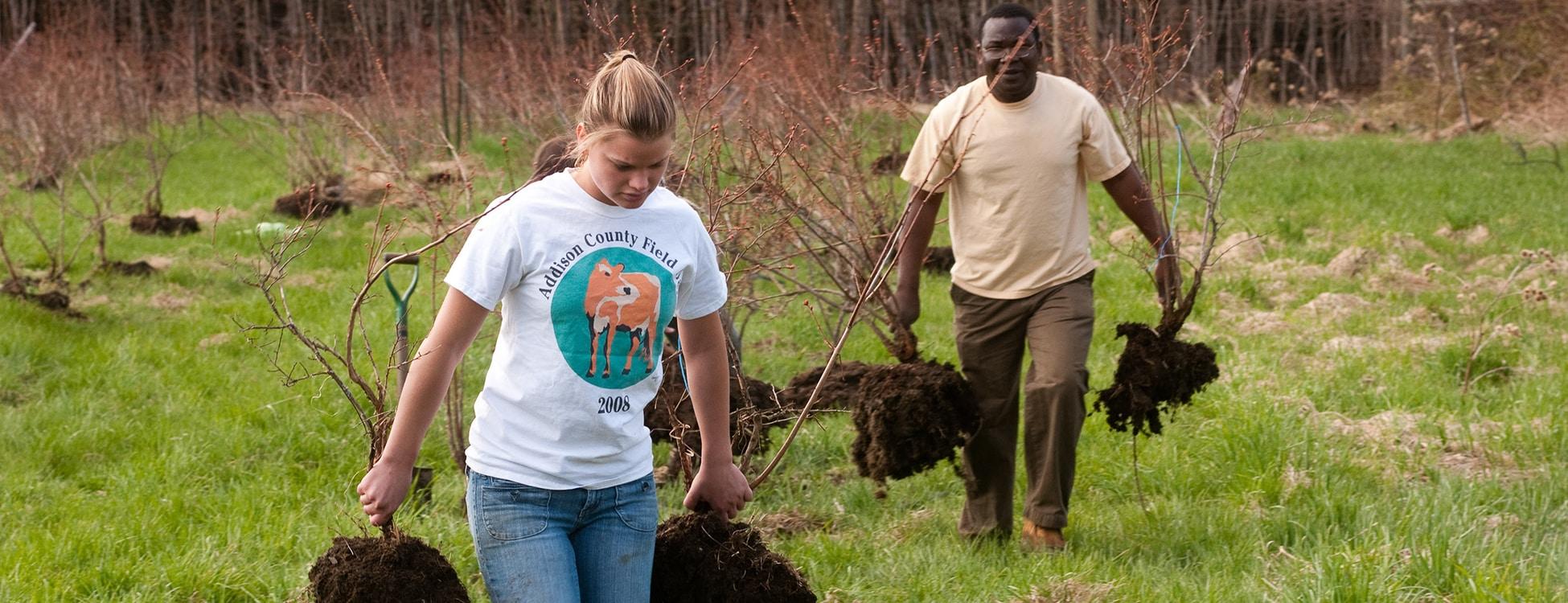 Planting blueberry bushes, diversity, outside