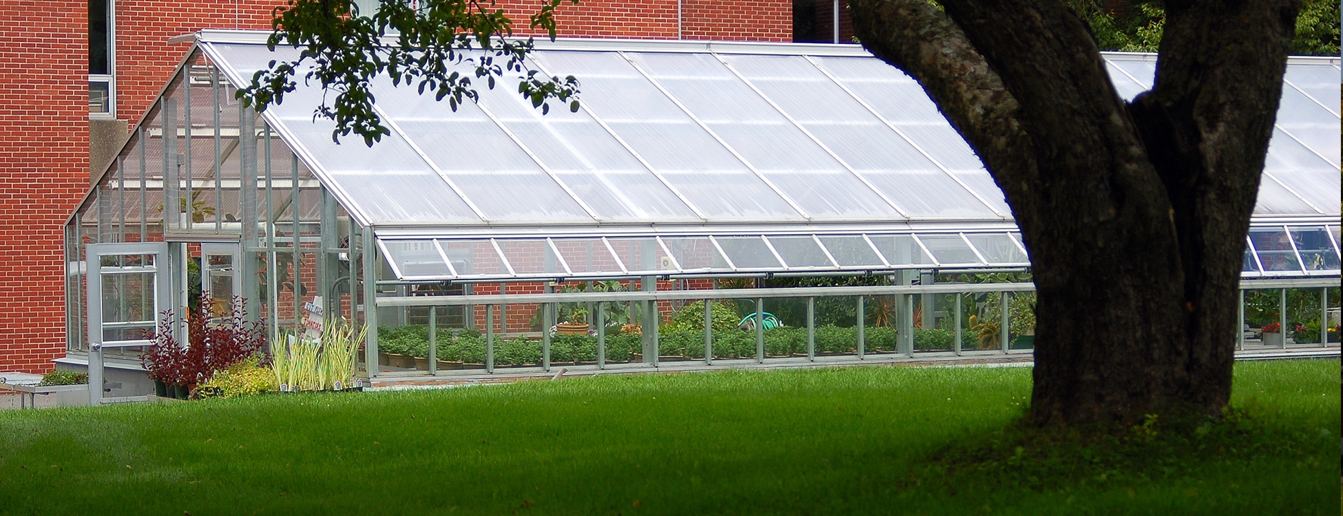 greenhouse, Randolph Center campus, landscape contracting, flowers, plants
