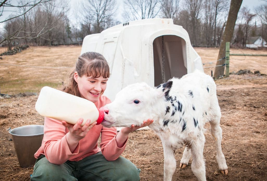 female student, bottle feeding calf, dairy farming, agriculture