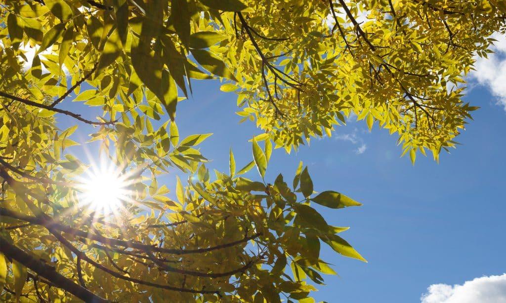 blue skies, new leaves, sun