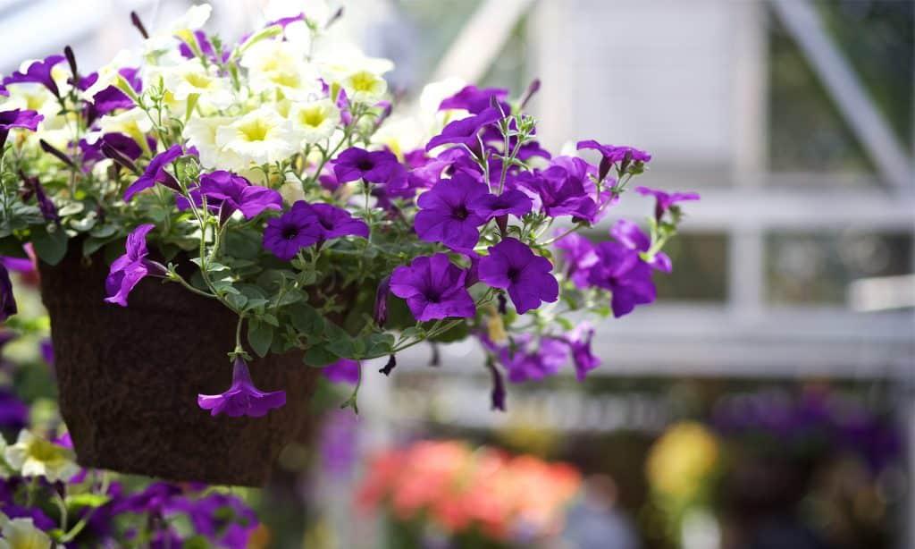 flowers, spring, greenhouse, landscape