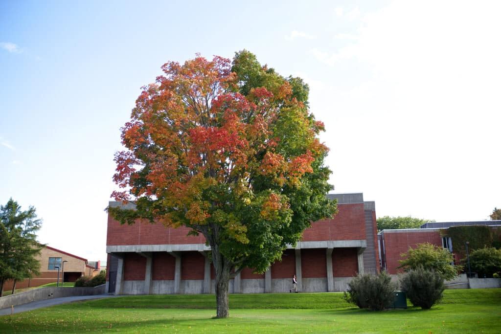 Colorful fall tree, autumn, Randolph Center campus