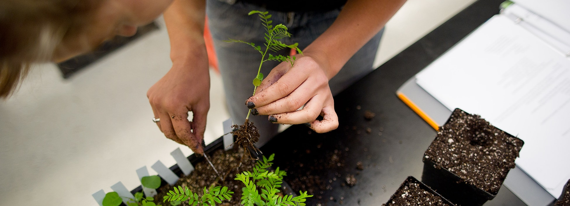 student planting, plants, agriculture